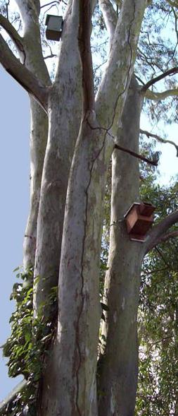 Nest box monitoring